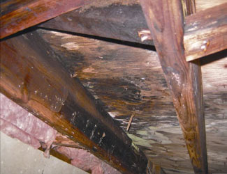 mold and rot in a State College crawl space